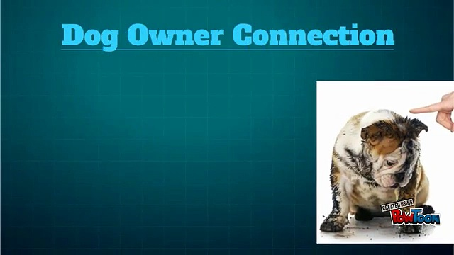 Amazing Dog Behaviorist  at Dog Owner Connection