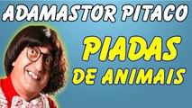 ░▒▓ Piadas Do Adamastor Pitaco - Piadas De Animais - Piadas Engraçadas - Adamastor Pitaco Melos