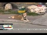 BT: Canine parvovirus at canine distemper virus, nakamamatay at mabilis na makahawa sa mga aso