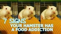 7 signes qui prouvent que votre hamster est accroc à la nourriture!