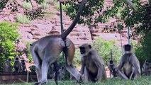 La Maschera Di Scimmia 1/2 - Video Dailymotion