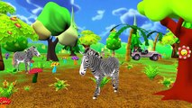 Learning Animals - Tiger Deer Lion Elephant Duck Sounds | Animals Sounds For Kids And Children