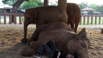 A girl lies down next to the elephant. What happens next is just tender