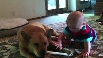 Bébé et chien : de grandes histoires d'amour - Compilation adorable et drole