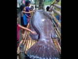 Mystery behind Antique's giant grouper fish explained | KMJS