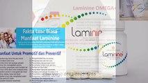 0812-8899-4755 (Ibu Stevani),Harga Distributor Laminine,Harga Laminine Termurah