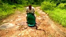 Crazy moment snake catcher releases hundreds of snakes into forest