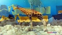 CAT Iron Diesel Train - Zoo animals tigers hippos rhinos giraffes zebras elephants cheetas gorilla