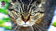 Кошки и люди Кошки спасают человека