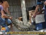 UB: Sawa na 6 na metro ang haba, nahuli sa Caoayan, Ilocos Sur