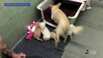 Retrouvailles entre une chienne et ses 4 chiots !