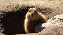 The Real Reason Why Groundhogs Come Out To See Their Shadows