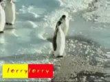 Funny Clips - Pinguoin tripping