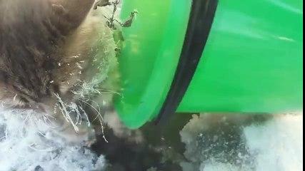 Un chat prisonnier de la glace secouru