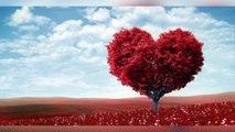 Concours St Valentin : la st Valentin approche... Envoyez nous vos messages d'amour!