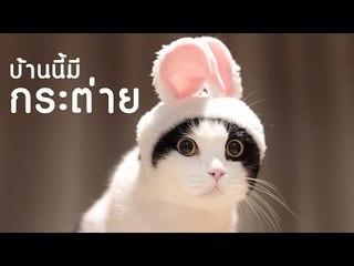 Theycallmemeaow | บ้านนี้มีกระต่าย!!!