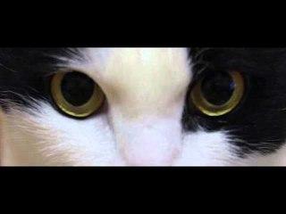 Theycallmemeaow - Fruit Cat