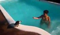 Ce gamin joue dans sa piscine avec son canard !