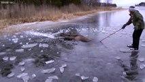 Il vient sauver un élan piégé dans la glace sur un lac gelé