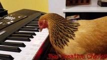 Une poule joue « America the Beautiful » au clavier