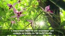 Les orchidées à l'honneur au Jardin des Plantes de Paris
