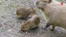 Premier bain de foule pour les bébés animaux du zoo de Thoiry