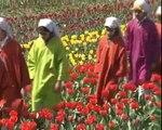 Tourist Enjoy at Asia's largest tulip garden, the Indira Gandhi Memorial Tulip Garden in Srinagar