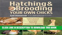 Epub Download Hatching   Brooding Your Own Chicks: Chickens, Turkeys, Ducks, Geese, Guinea Fowl