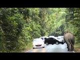 Seekor Gajah di Taman Nasional Khao Yai Thailand meremukan mobil pengunjung - NET24