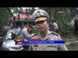 Akibat Hujan Deras Diiringi Angin Kencang, Sejumlah Pohon Tumbang di Bandung - NET 24