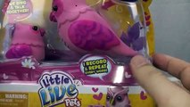 Little Live Pets Owl and Baby Toy Review tweet talking singing bird interactive toy