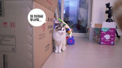Cat Iz's cute lonely love 고양이 이즈의 귀여운 짝사랑