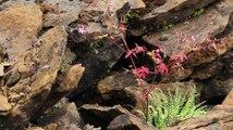 Reptiles - Lézard des murailles - La faune et la flore de M&M