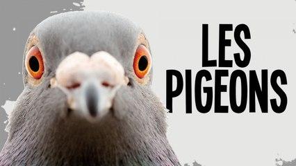 LES PIGEONS (cette arnaque)