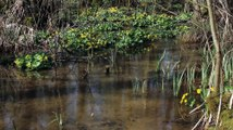 Amphibien - Crapaud commun - La faune et la flore de M&M
