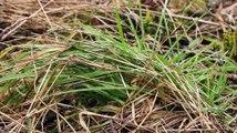 Amphibiens - Salamandre tachetée - La faune et la flore de M&M