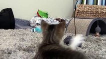 Dog Adopts and Protects Abandoned Kitten Cats and Dogs compilation