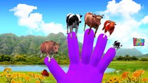 Colors Animals Nursery Rhymes For Kids | Wild Animals Songs For Babies | Finger Family Animals