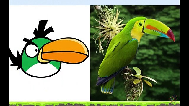 Angry Birds In Real Life - Angry Birds En La Vida Real - Angry Birds Transform into real