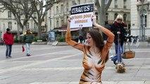 L'association PETA défend les animaux des cirques à Avignon