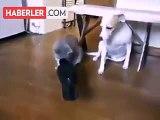 Karga Gagasıyla Kedi ve Köpek Besledi