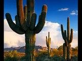 Kaktus Bend - Ludo ludo