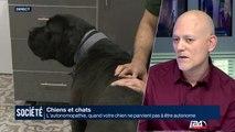 Chiens et Chats : l'autonomopathie, quand votre chien ne parvient pas à être autonome