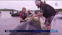 Baleines échouées en Nouvelle-Zélande : toujours pas d'explication scientifique
