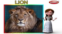 Lion Rhyme For Kids With Actions | Lion Rhyme With Actions | Action Songs For Kids | Animal Rhymes