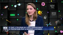 Hello startup : Catspad, le distributeur de nourriture et de croquettes intelligent pour chat - 17/02
