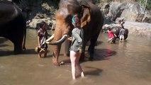 Une femme s'approche d'un éléphant pour le caresser, mais sa réaction est hallucinante