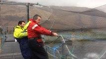 Scottish fish farms fight sea lice
