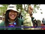 Festival Meti Kei, Langkah Awal Menjual Kecantikan Surga Tersembunyi di Kepulauan Kei - NET5