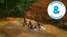 LOcéan Indien - Monbasa, Zanzibar, Mayotte, Madagascar - croisière à la découverte du